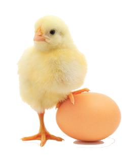 egg_project_slider.png