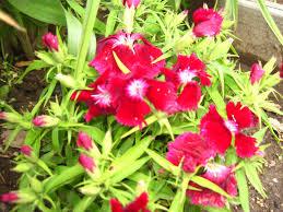 flower-1.jpeg